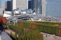 Chicago Streetscene: Fifty Shades of Fall at the Lurie Garden