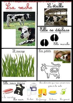 fiche d'identité de la vache Preschool Learning Activities, Classroom Activities, Teaching Kids, Animals For Kids, Farm Animals, Animals And Pets, Science For Kids, Science And Nature, Farm Unit