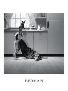 Dog Poster, Busted, by Howard Berman