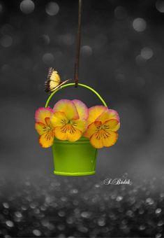 1087 best black white yellow splash images on pinterest in 2018 precious color splash photo splash of color colour photography flower photography pretty mightylinksfo