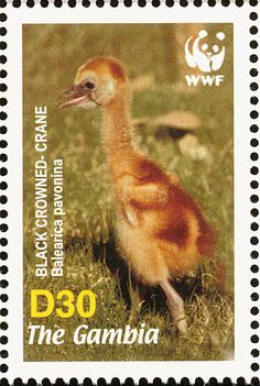 Black Crowned Crane stamps - mainly images - gallery format