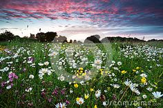 Summer Wildflowers At Dramatic Sunset - Download From Over 24 Million High Quality Stock Photos, Images, Vectors. Sign up for FREE today. Image: 31796987