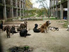 85 cani da aiutare.... e in fretta!