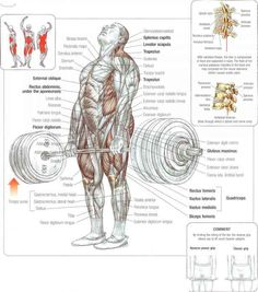 1000+ images about Nurture/Fitness on Pinterest | Overhead ... Overhead Press Muscles Worked