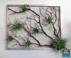 "30 x 24"" Tillandsia Screen #Tillandsia #airplants"