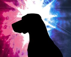 Who's going to be the next American Hero Dog? Make your nomination here!
