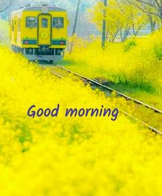 Good Morning Images For Whatsapp Cute Good Morning Images, Good Morning Beautiful Quotes, Morning Quotes Images, Latest Good Morning, Good Morning Inspirational Quotes, Good Morning Flowers, Good Morning Picture, Good Morning Messages, Good Morning Greetings