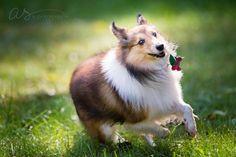 Rescue dog outdoor portrait   Pet Photography   Main Line Philadelphia   Copyright 2015 Aliza Schlabach Photography   ByAliza.com