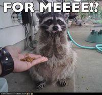 Image - Funny-animals-and-jokes.jpg - Pretty Little Liars Wiki - Wikia