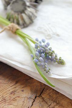 Grape hyacinths on linen #flowers