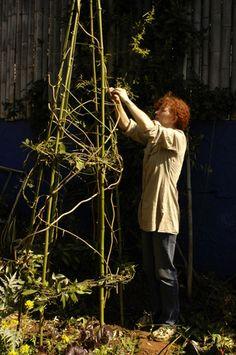 Jane's Delicious Garden - VERTICAL VEGETABLES