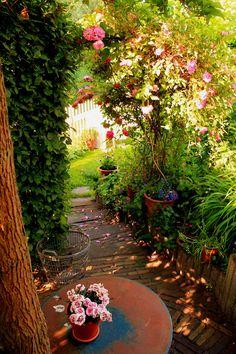 Splashes of light, cottage garden