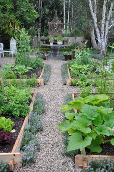 kitchen garden love the herbs along the paths