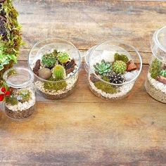 . 植物好きな方への贈り物探しにー . 本日からの三連休、よろしければお店でお待ちしています . #Kitowa #樹と環 #贈り物 #植物のある暮らし