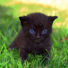 little black cat with blue eyes by Tina 95 Photo To Art, Cat With Blue Eyes, Tier Fotos, Crazy Cats, Funny Images, Animals, Black Kittens, Happy Friday, Baby Blue