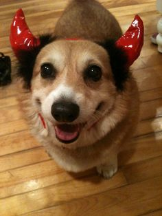 thingsonhazelshead:  Happy today trying out Halloween costume ideas!