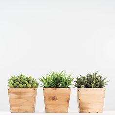 Succulent Box - Magnolia | Chip & Joanna Gaines