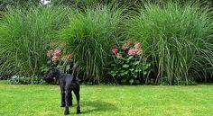 Gräser und Hortensien