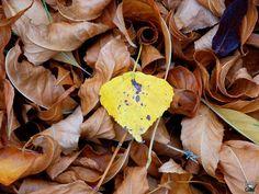 """Por Carmen Prada Con la entrada del otoño, llegan frases como """"tengo una desgana…"""", """"me siento cansado y no he hecho nada"""", """"estoy medio depre"""". No sé vosotros, pero yo las escucho a diario,…"""