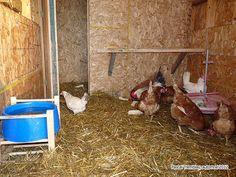 Nid Pour Poulailler : 1000 images about poulailler on pinterest hen house ~ Premium-room.com Idées de Décoration