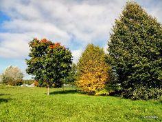 """I added """"Kreativ im Rentnerdasein: Herbst-Grün-Nuancen"""" to an #inlinkz linkup!http://kreativ-im-rentnerdasein.blogspot.de/2013/10/foto-projekt-beauty-is-where-you-find.html"""