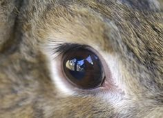 Red Eye in Rabbits Red Eyes, Art Boards, Mystery, Bunny, Creatures, Concept, Fantasy, Taxidermy, Rabbits