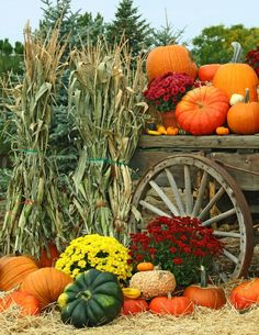 Gardening Autumn - Autumn garden harvest - flowers, pumpkins, mums - fall decorating - With the arrival of rains and falling temperatures autumn is a perfect opportunity to make new plantations Mums In Pumpkins, Fall Pumpkins, Harvest Time, Fall Harvest, Deco Haloween, Diy Jardin, Autumn Scenes, Fall Pictures, Fall Pumpkin Pictures