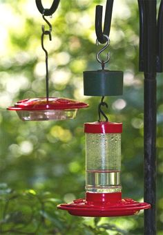 The best hummingbird feeders are inexpensive and easy to keep clean. Clic on image for more hummer hints. © Bill Hilton Jr. (Hilton Pond Center for Piedmont Natural History, York SC USA)