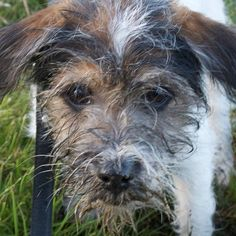 heididahlsveen:  Dirt #atsjoo #puppy #dog #hund #valp