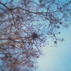 Un nido en medio de las ramas. Gracias naturaleza. #nature #bird #birds #nest #navarra #pamplona #navarra #europe #sky #tree #trees #natural #naturaleza #amor #love #instagood #instagram #instadaily #instagramers #instaday #instacool #cool #good