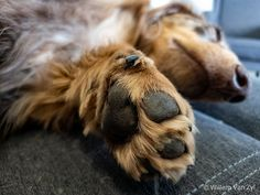 Nature & wildlife photography by Willem Van Zyl. Puppy Paw, Dog Photos, Wildlife Photography, Mammals, Dachshund, Puppies, Dogs, Cute, Cubs