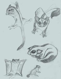 Pet tips sugar glider sketch, sugar glider bonding pouch. Sugar Glider For Sale, Sugar Glider Baby, Sugar Glider Bonding Pouch, Sugar Gliders, Animal Sketches, Animal Drawings, Art Sketches, Art Drawings, Pet Wolf