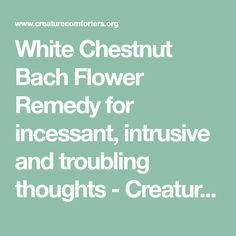White chestnut bach flower remedy for incessant intrusive and white chestnut bach flower remedy for incessant intrusive and troubling thoughts creature comforters mightylinksfo Choice Image
