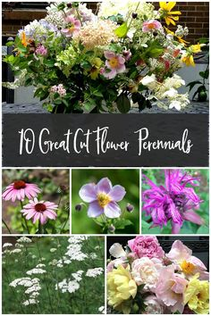 This list of 10 great cut flower perennials are the perfect choices for your flower garden. Easy to grow in a wide range of long blooming plants that you can enjoy in your home or take a wonderful bouquet to someone you love. garden gift garden tips Garden Shrubs, Flowering Shrubs, Shade Garden, Garden Pests, Cut Flower Garden, Flower Gardening, Cut Garden, Garden Care, Olive Garden