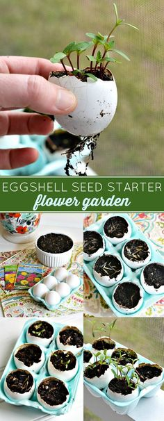 How to Make a DIY Eggshell Seed Starter Flower Garden