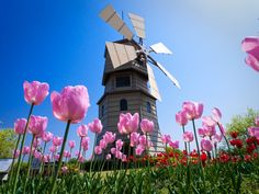 El Conventillo de la Museóloga.: Historia Museística: La fiebre de los tulipanes