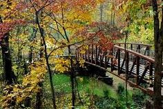 Fall foliage on the Crystal Bridges Trail. Crystal Bridges Museum of American Art, Bentonville, Arkansas. crystalbridges.org  #bridge #outdoors #autumn