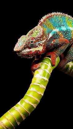 If I was going to have a reptile for a pet, this would be the one:)