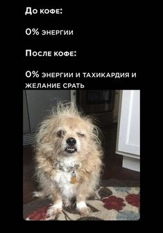 Funny Pictures, Lol, Animals, Fanny Pics, Animales, Animaux, Funny Pics, Animal, Funny Images