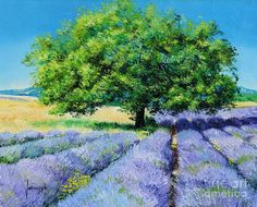 """""""Lavender Fields"""", the French impressionist Jean-Marc Janiaczyk Lavendar Painting, Lavender Paint, Lavender Walls, Lavender Fields, Lavander, Beautiful Paintings, Beautiful Landscapes, Landscape Art, Landscape Paintings"""