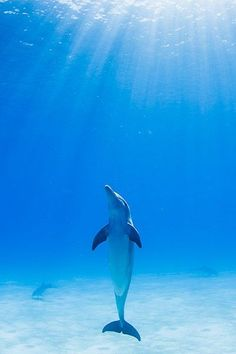 Wild Bottlenose Dolphin Encounters Lets Go Diving Amazing discounts - up to off Compare prices on of Hotel-Flight Bookings sites at once Multicityworldtra. Under The Water, Under The Sea, The Ocean, Ocean Life, Orcas, Animals Beautiful, Cute Animals, Dolphin Encounters, Marine Biology