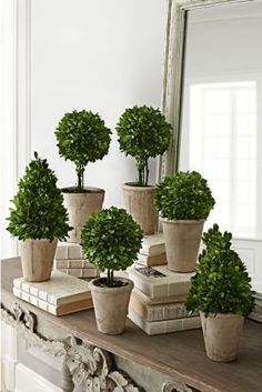 Our collection of preserved boxwoods in limestone pots look like miniatures of the ones you see in French Renaissance gardens. In six sizes, sold individually, they Boxwood Topiary, Topiaries, Snow White Wedding, Decorative Light Switch Covers, Sweet Woodruff, Preserved Boxwood, Inside Garden, Garden Urns, Succulent Terrarium