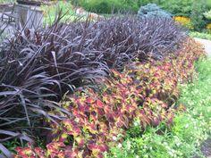 Gardens%2C+August+3%2C+2011+011.jpg (1600×1200)