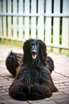Um sorrisão de boas vindas é certeza se você chega em casa e tem um cachorro! #Sorria #Cachorro