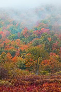Crazy Vermont Color in New England