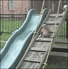 4gifs: Bulldog puppy loves the slide. [video]