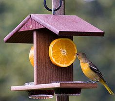how to make an oriole jelly feeder - Google Search