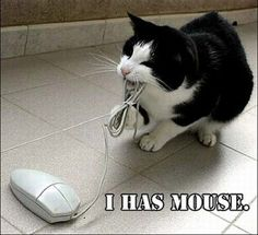 Get a Funny Cat And Computer Mouse funny picture from Cats. You can get dozens of other funny pictures from Cats. Here are some samples of funny words: funny, cat, and, computer, mouse Silly Cats, Crazy Cats, Cats And Kittens, Cute Cats, Funny Cats, Adorable Kittens, Pretty Cats, Funny Animal Quotes, Funny Animals