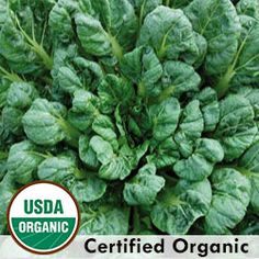 Asian Green, Tatsoi Organic | Seed Savers Exchange  this is pretty and really good - grow under row cover