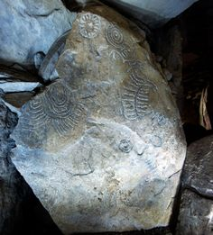 The neolithic art at Cairn T in Loughcrew | Sliabh na Cailleach in County Meath | Sacred Island Guided Tours